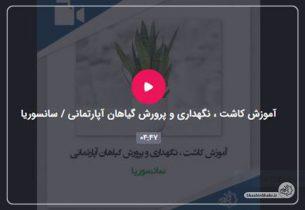 آموزش کاشت ، نگهداری و پرورش گیاهان آپارتمانی در فضای مجازی